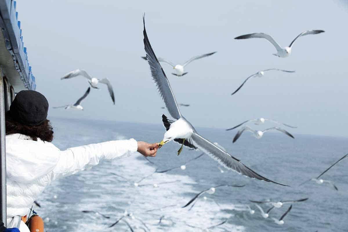 seagull symbolism