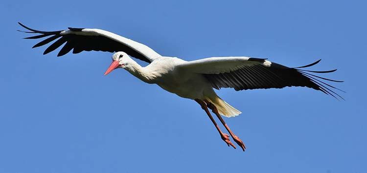 Spirit Animal Stork