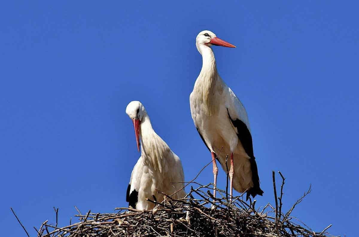 stork symbolism