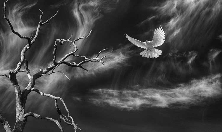 Bible Verses about Dead Birds
