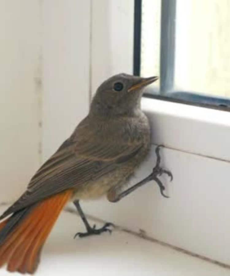 Bird-in-the-garage