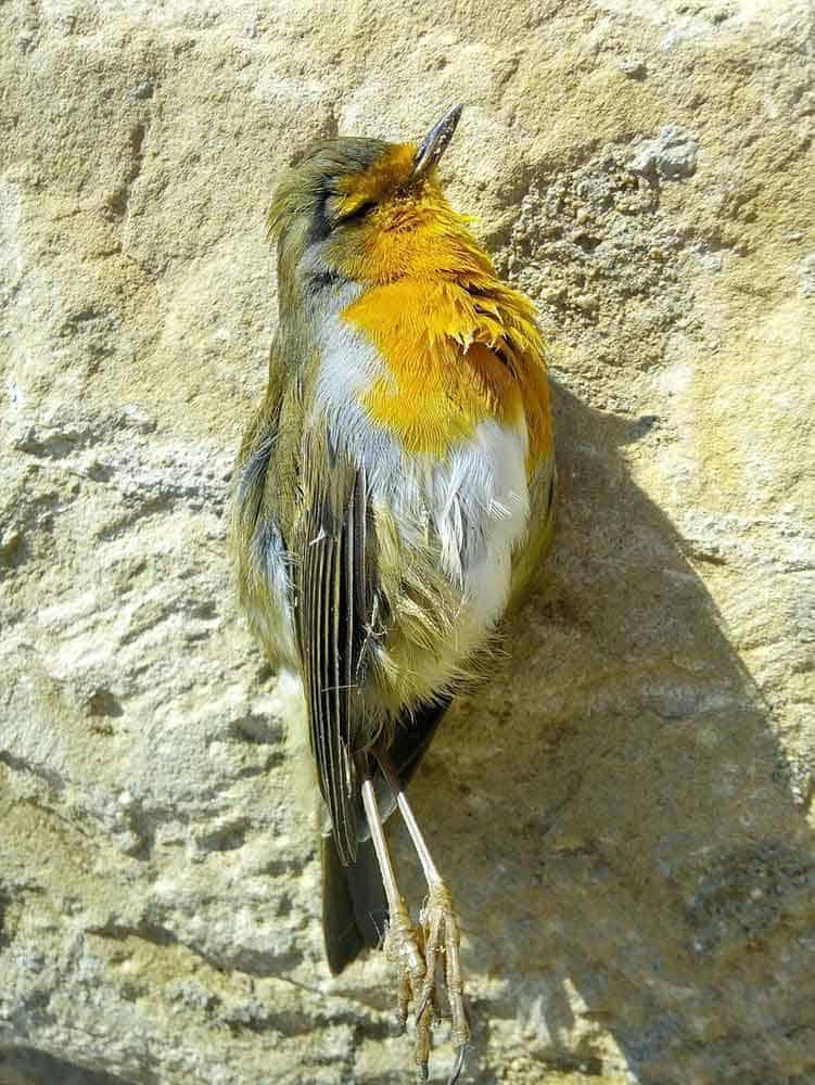 dead bird in a yard symbolism