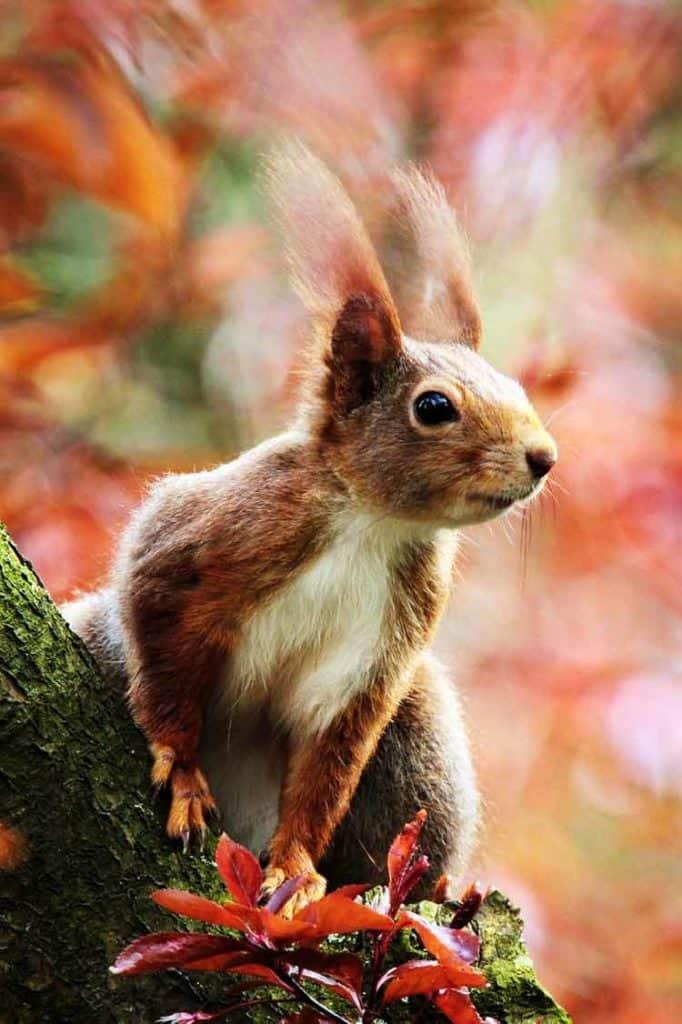 Squirrel Animal totem