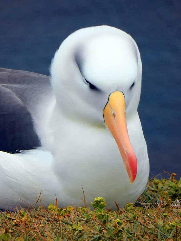 albatross-spirit animal
