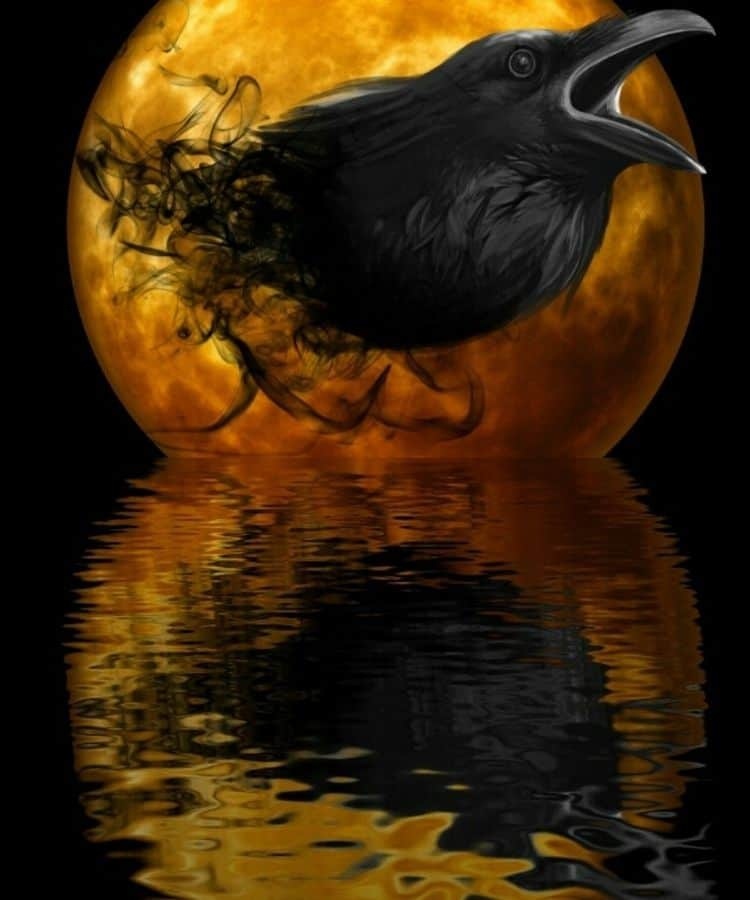 Spiritual Meaning of the Black Crow