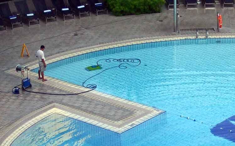 dead bird clean pool