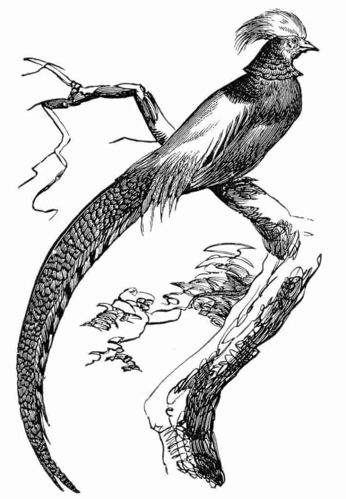 Pheasant animal totem