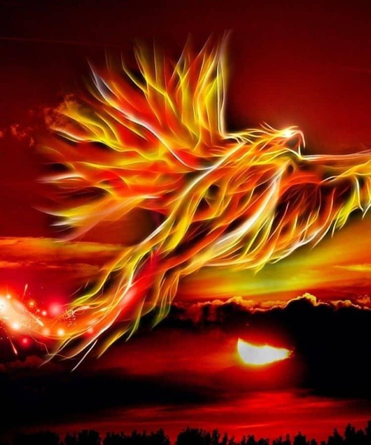 phoenix in dreams