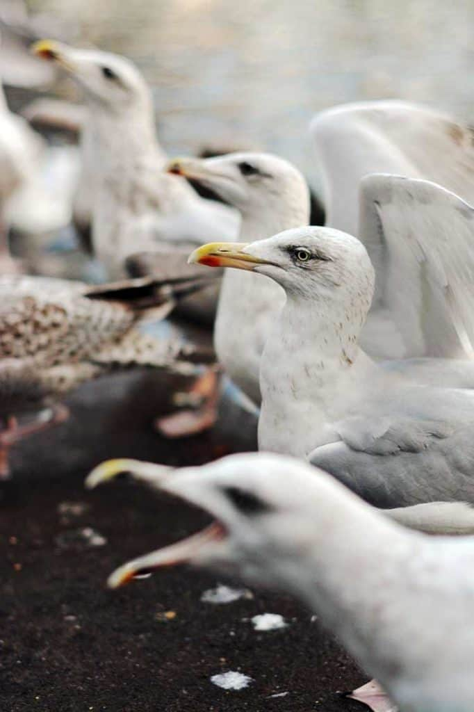 seagull spiritual meaning