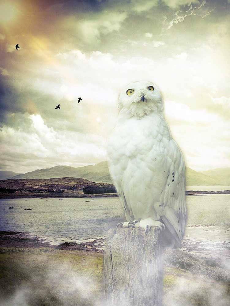 white owl spiritual meaning
