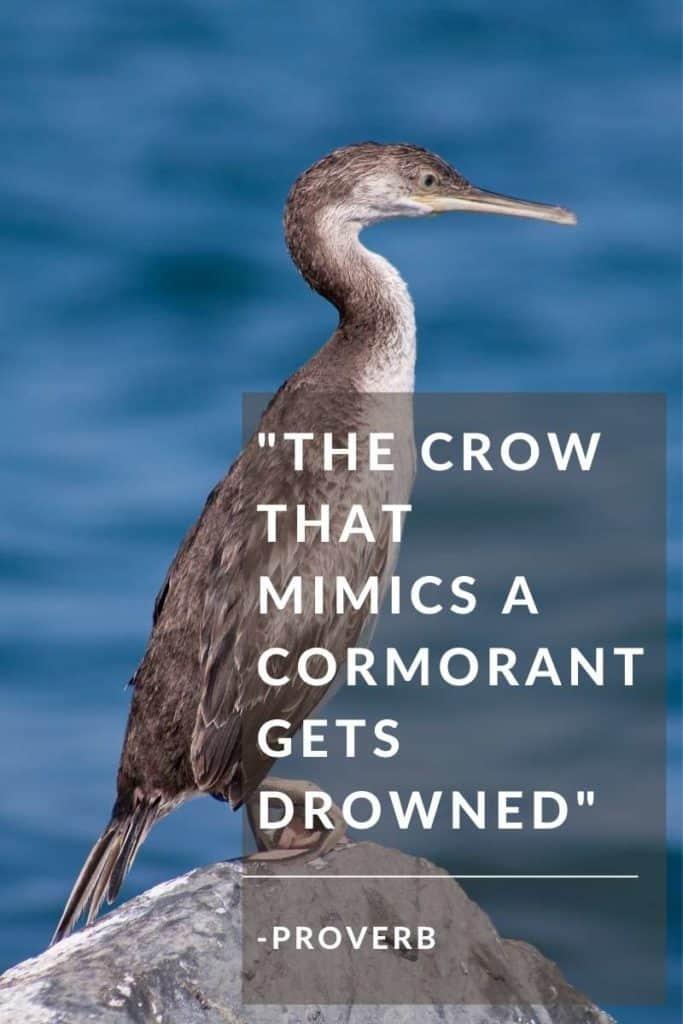 Cormorant Quote