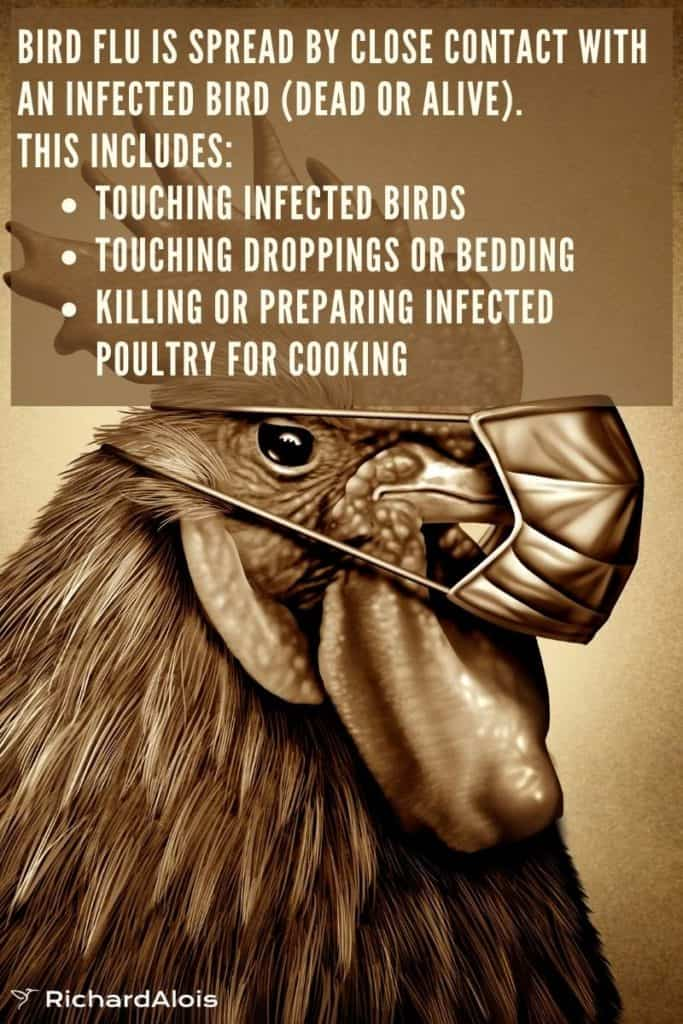 Dead Bird Bird Flu