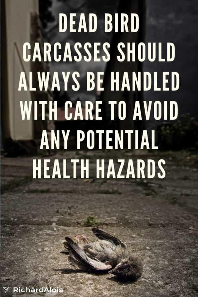 dead bird health hazzards