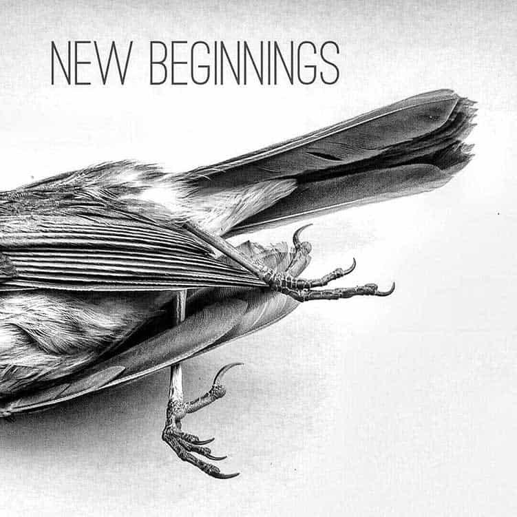 Dead-Bird-Omen
