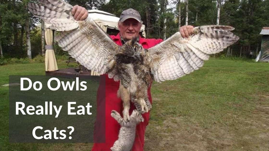 Do Owls Eat Cats