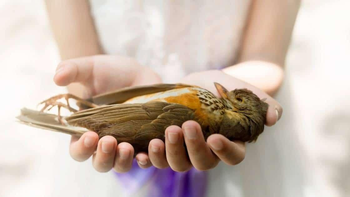 Handle Dead Birds Health And Hygiene