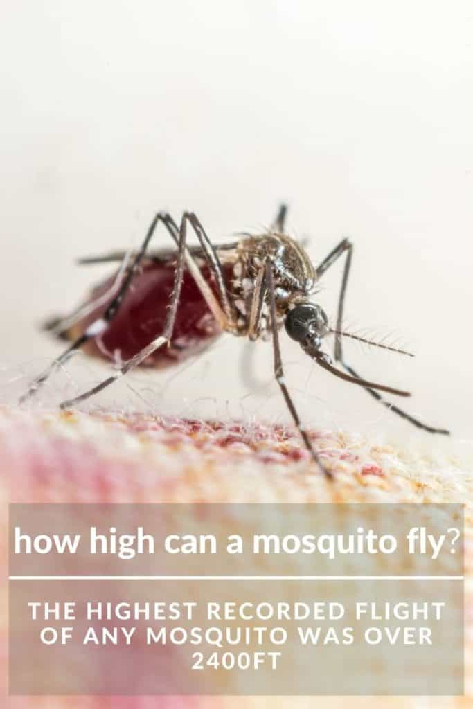 how high mosquito fly
