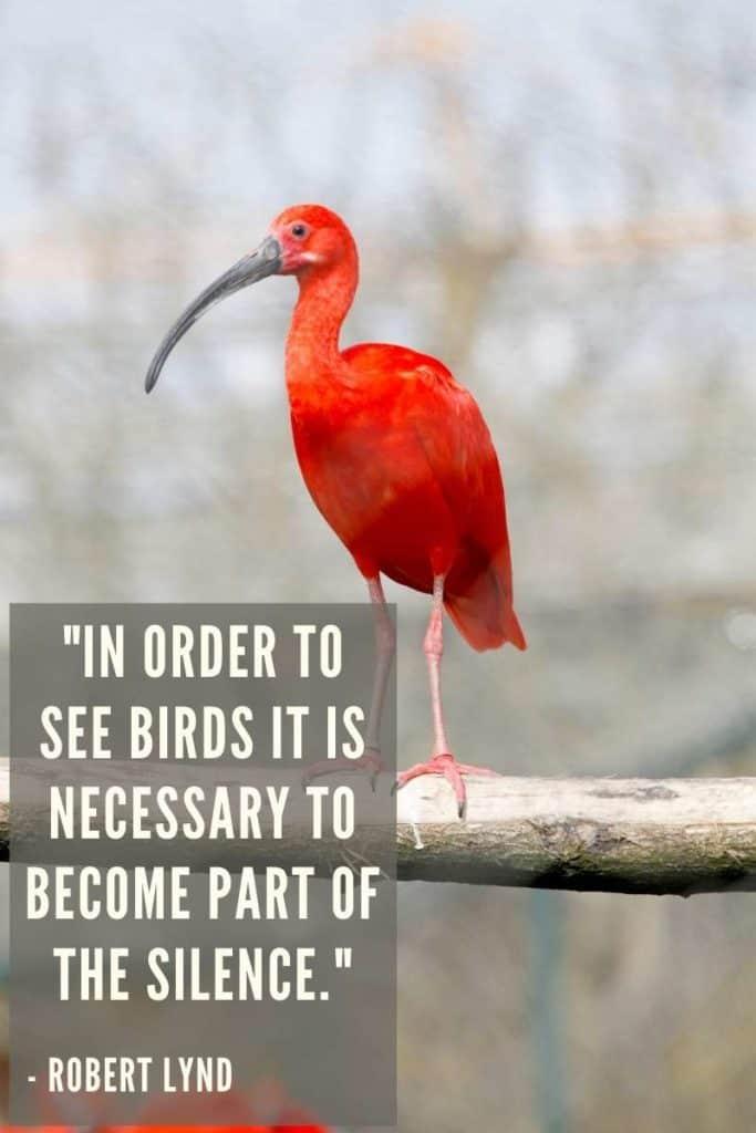 Ibis Quote