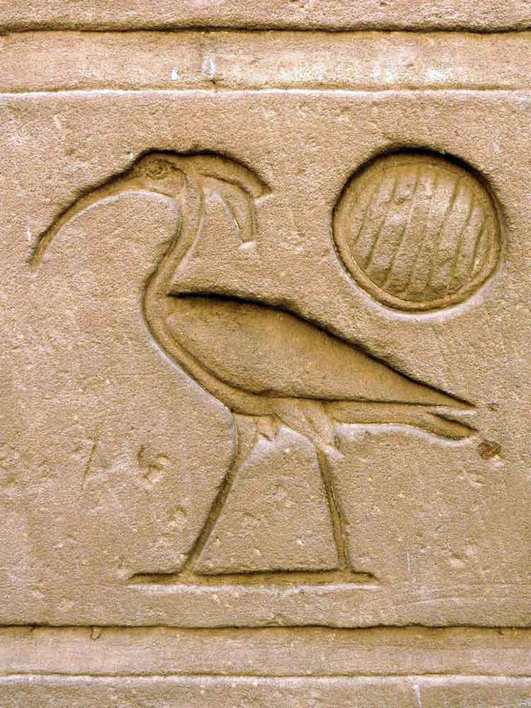 Ibis in Egypt