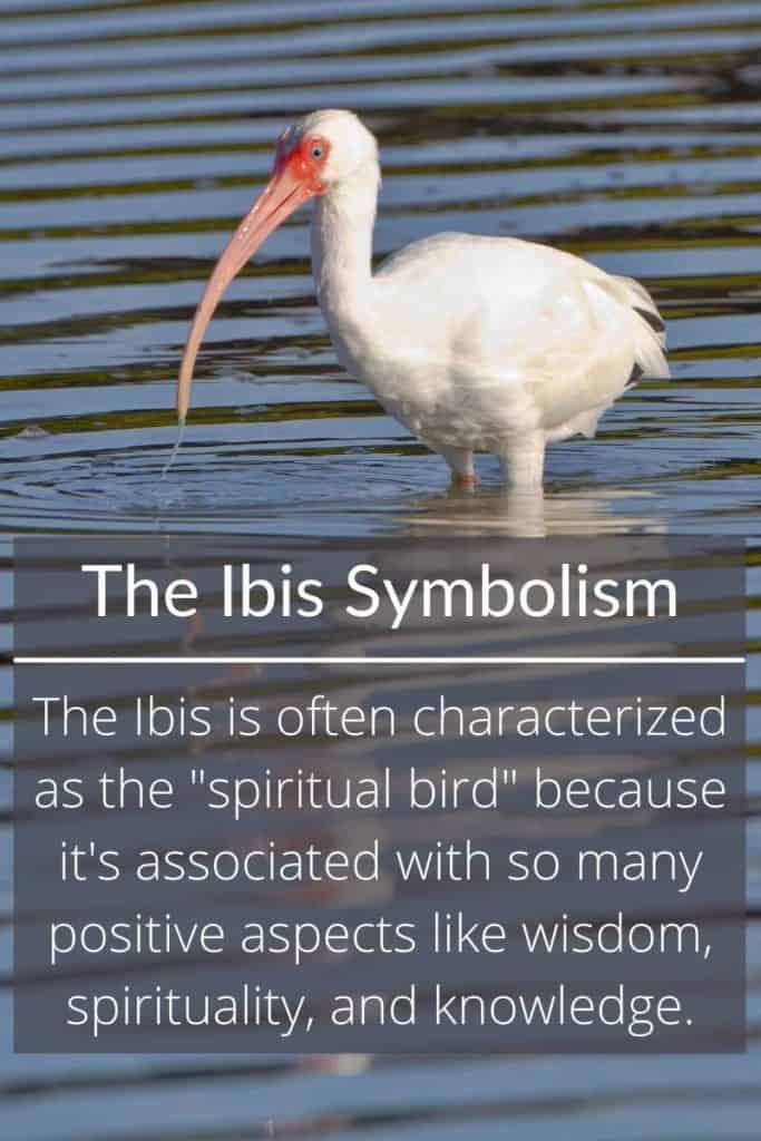 Ibis symbolic meaning