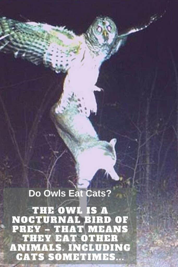owl catches cat