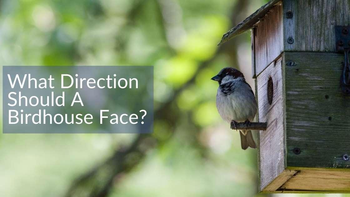 What Direction Should A Birdhouse Face