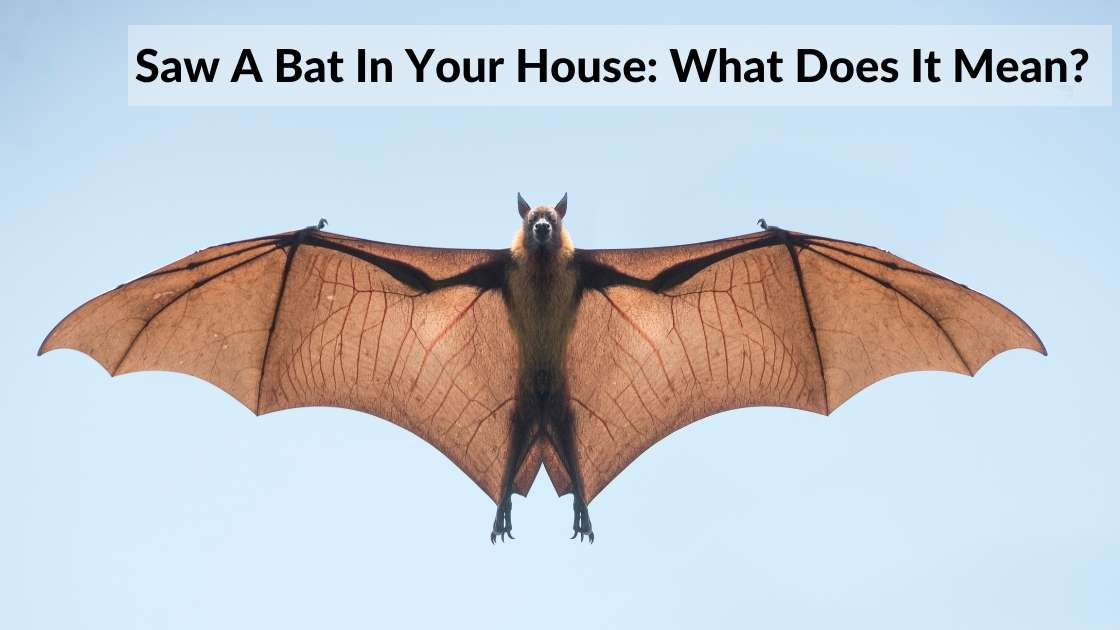 bat in house meaning