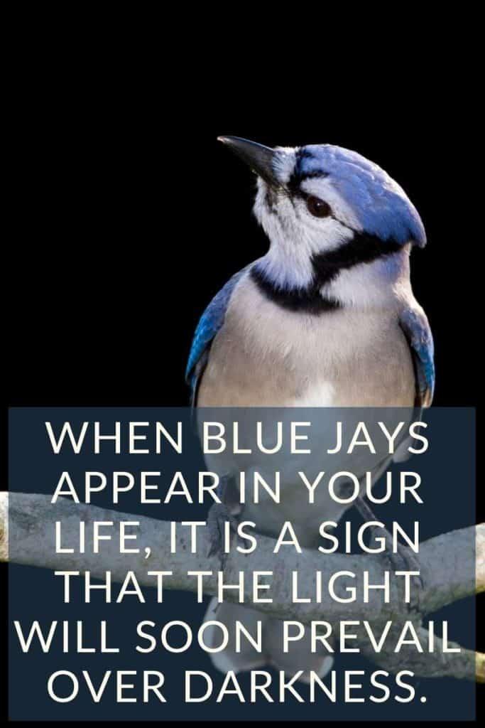 blue jays appear