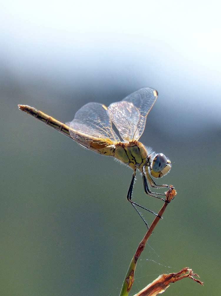 dead dragonfly spiritual