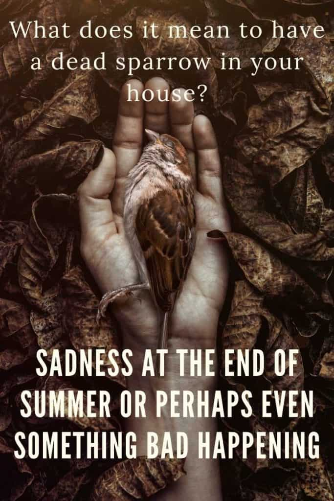 dead sparrow in your house