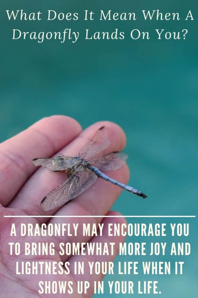 dragonfly has landed