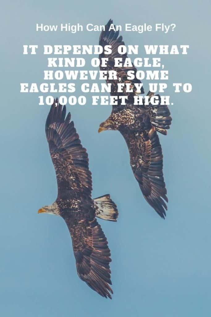eagles flying high