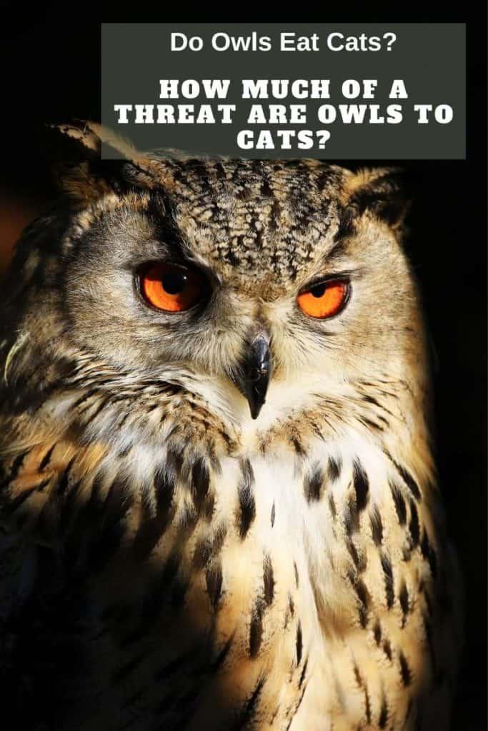 owl threat to cat
