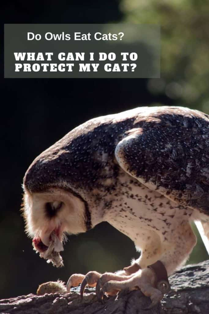 protect cat from owls