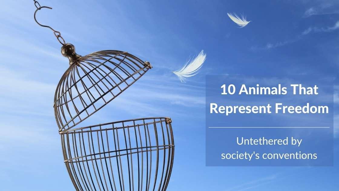 10 Animals That Represent Freedom