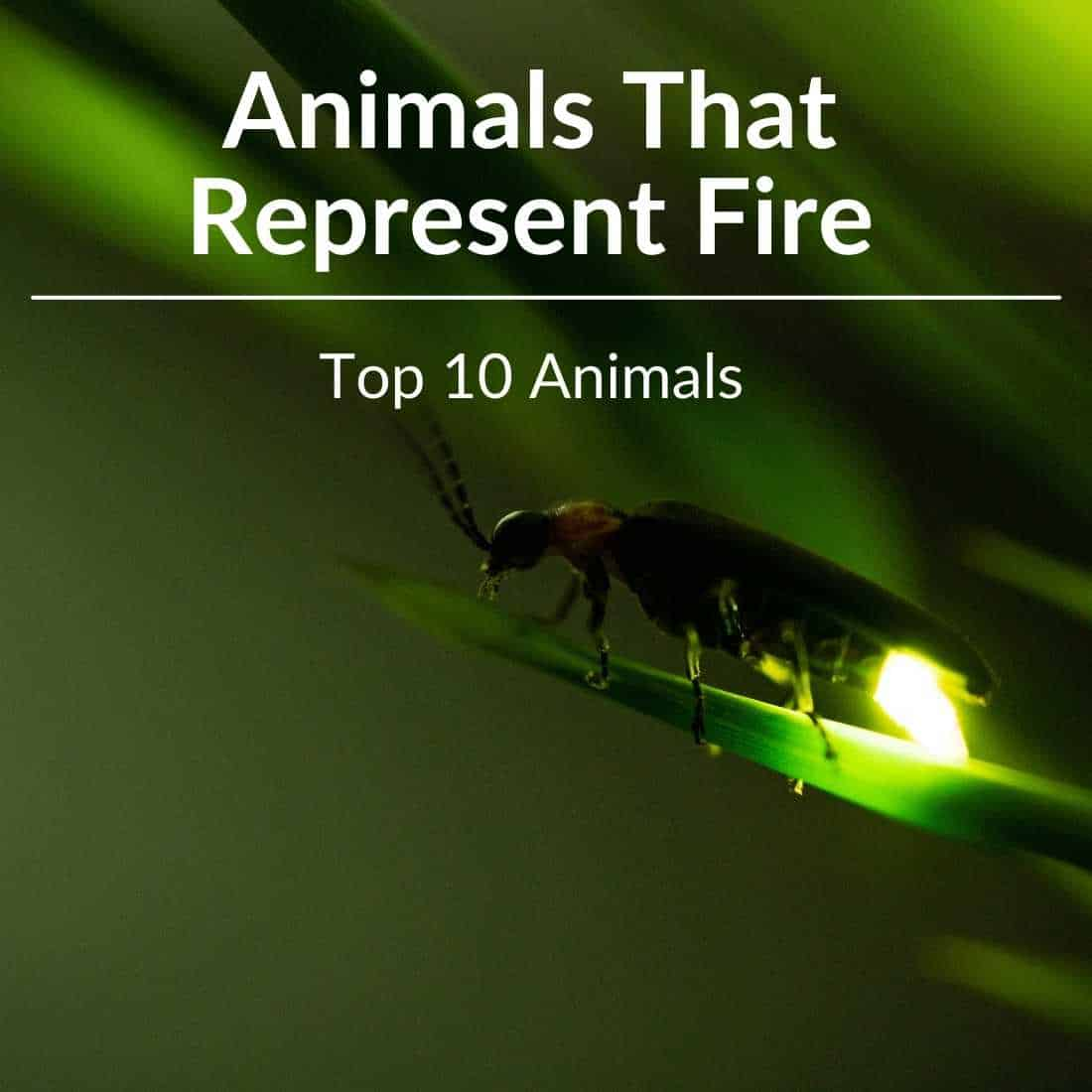 Animals That Represent Fire