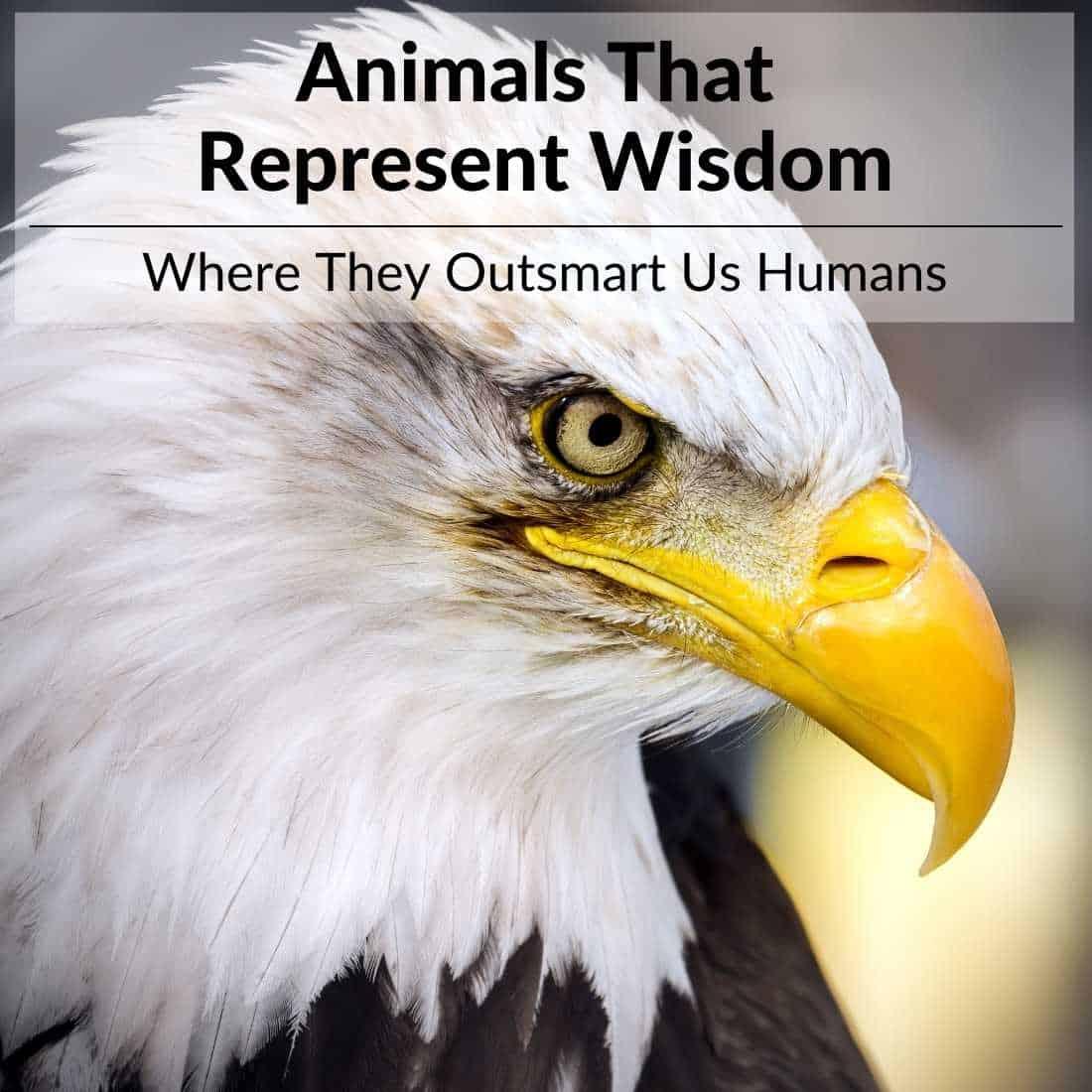Animals-That-Represent-Wisdom