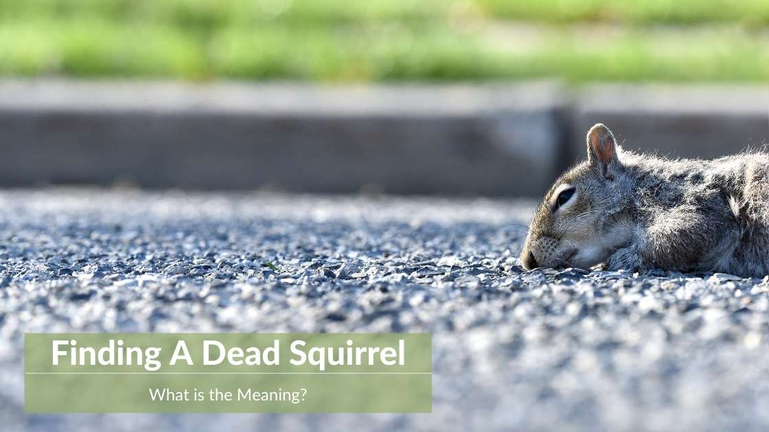 Dead Squirrel Meaning