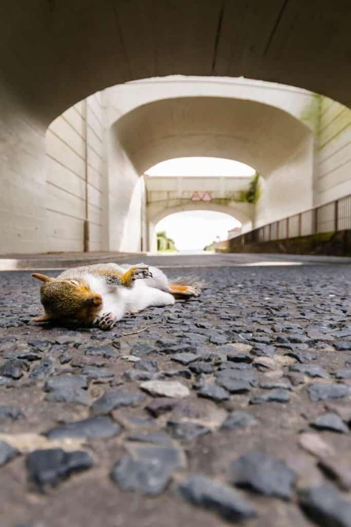 Dead Squirrel Symbolism
