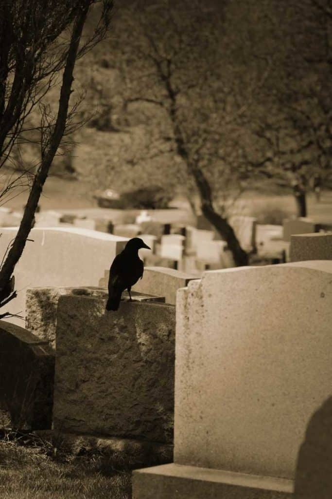 dead crow dream meaning