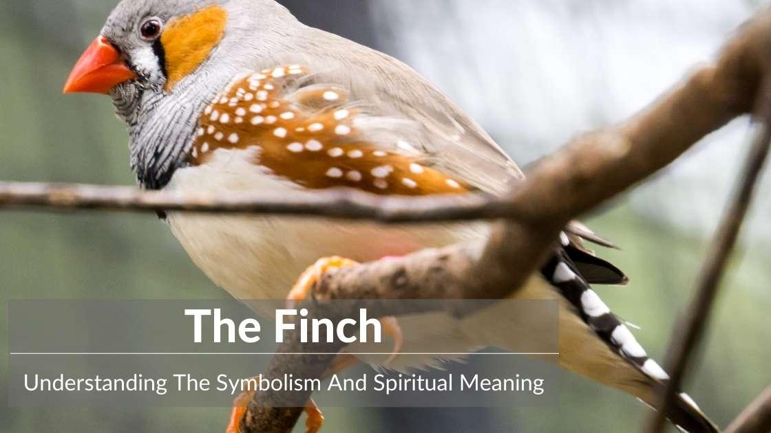 Finch symbolism