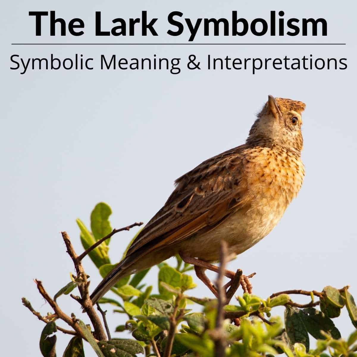 Lark Symbolism