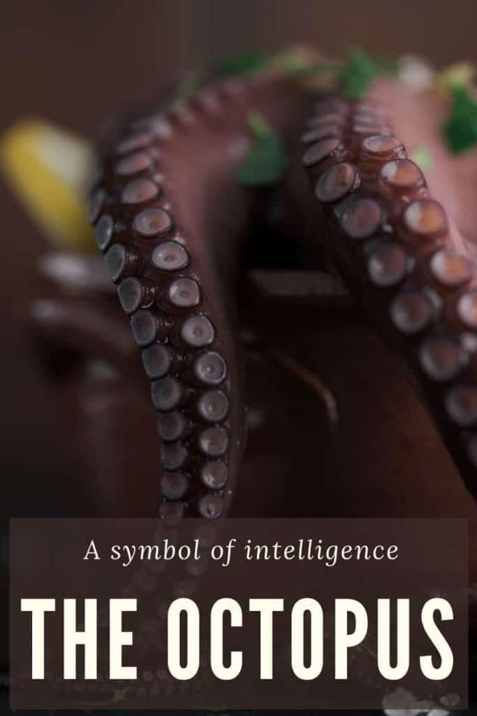 octopus symbol intelligence