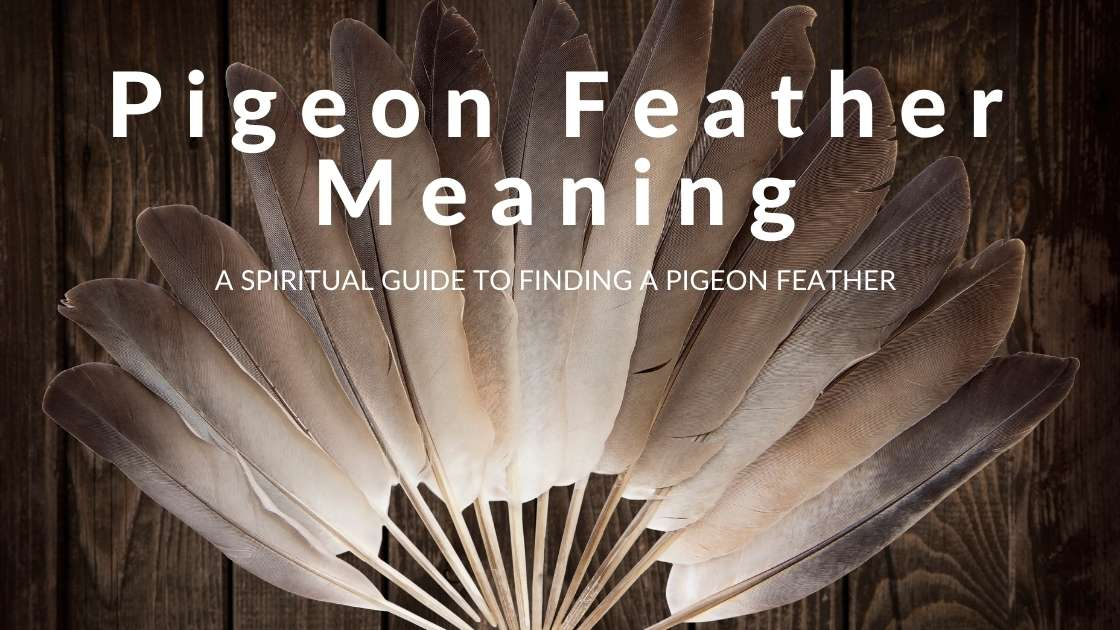 Pigeon feather meaning
