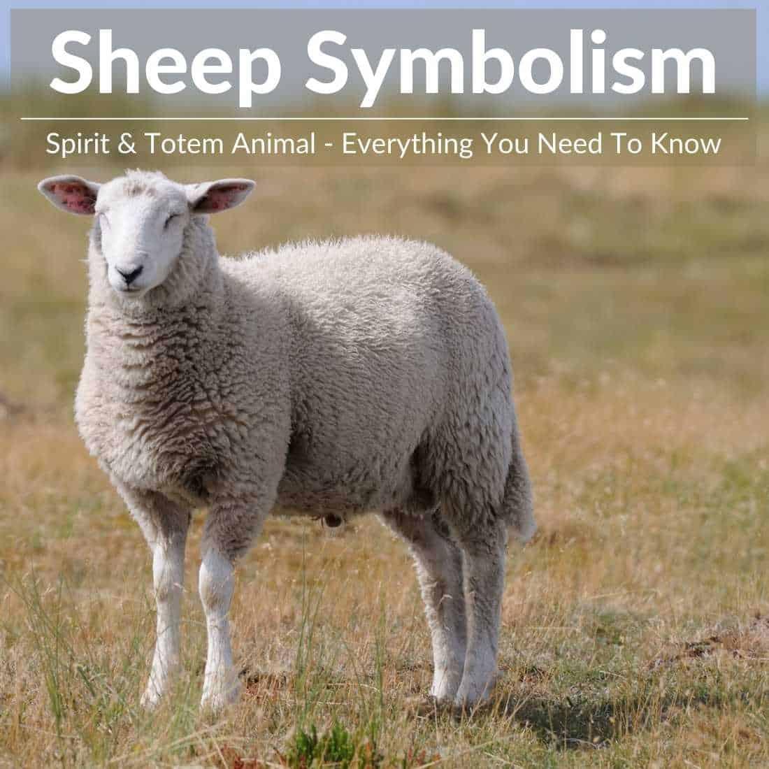 Sheep symbolism