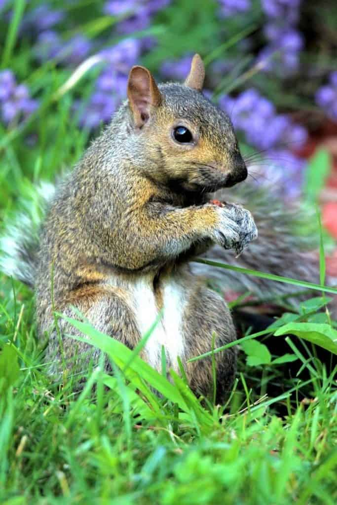 Spiritual meaning dead squirrel