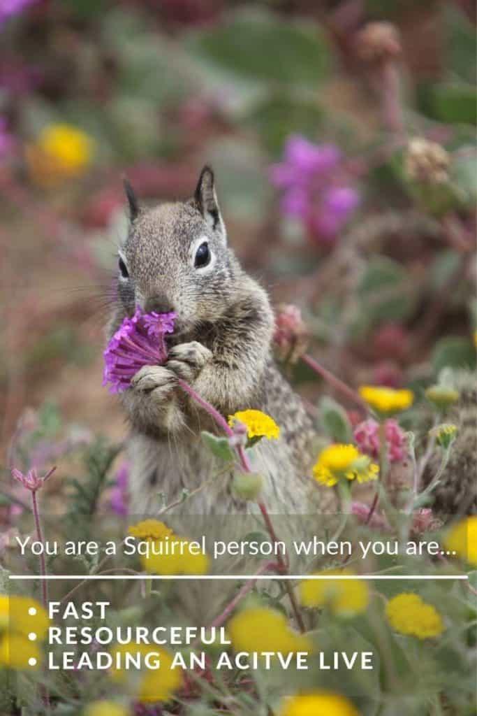Squirrel power animal