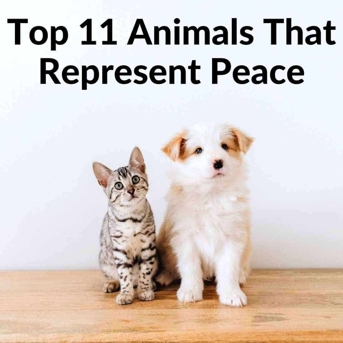 Animals That Represent Peace