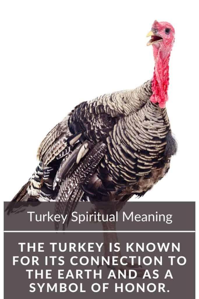 Turkey spiritual meaning