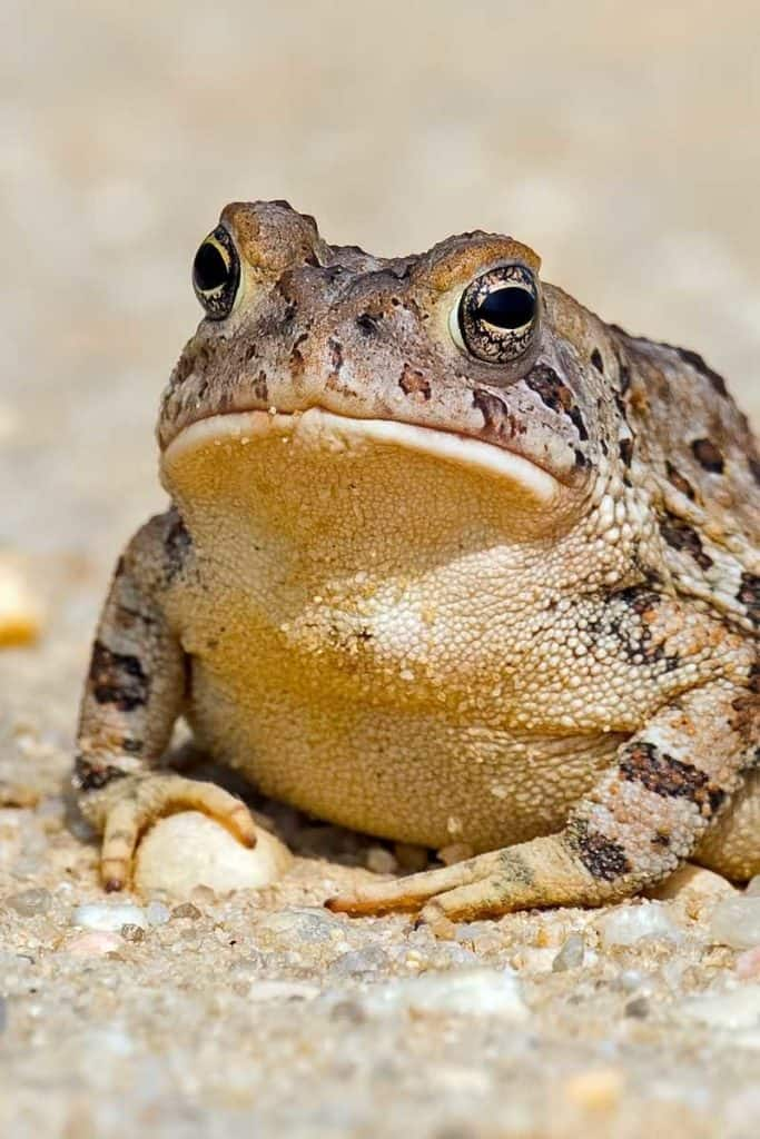 What do toads symbolize